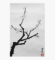 Little Plum Blossom Twig Photographic Print