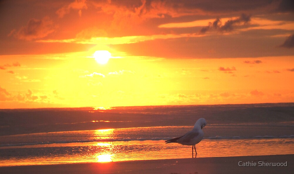 Lone gull at dawn by Cathie Sherwood