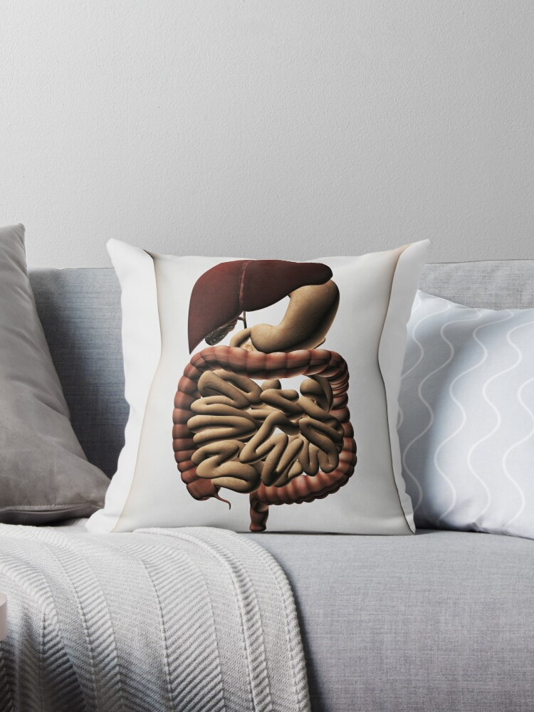 Cojines «Ilustración médica que muestra el sistema digestivo humano ...