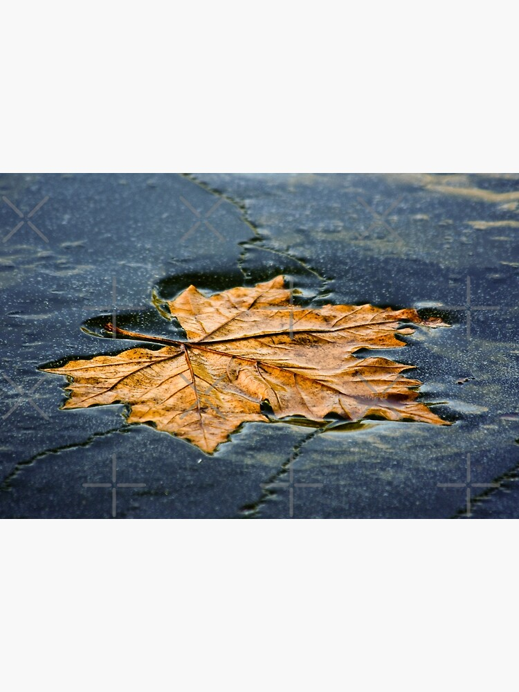 Leaf on ice by neoweb