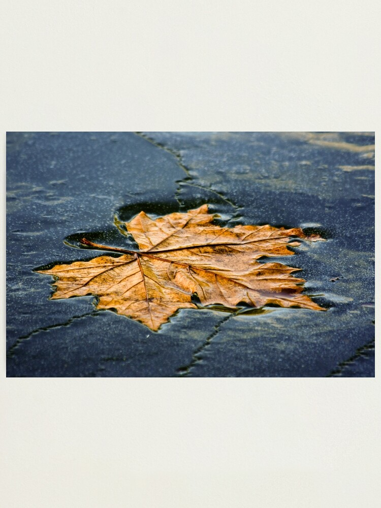 Alternate view of Leaf on ice Photographic Print
