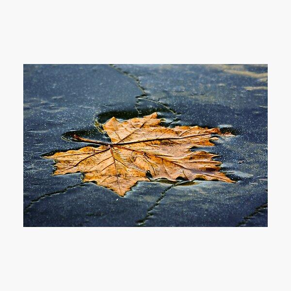 Leaf on ice Photographic Print