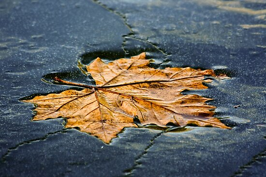 Leaf on ice by Julien Tordjman