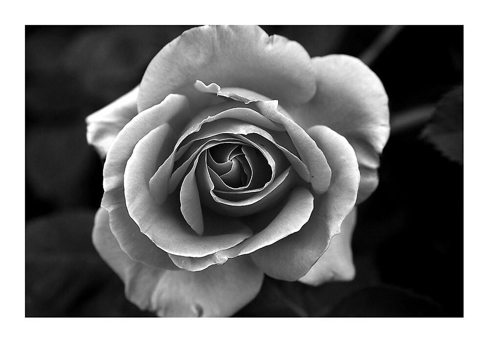 Shades Of Grey by Bryant Evans