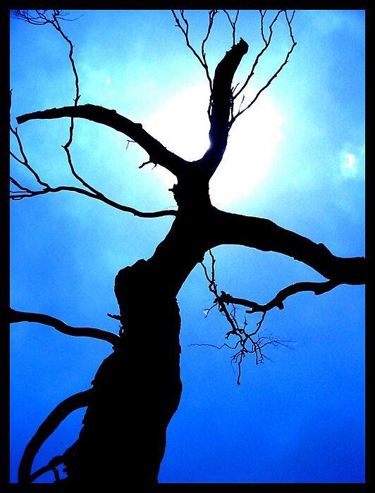 Black Tree by Bryant Evans