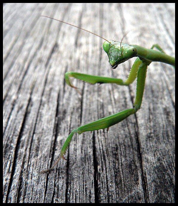 Mantis by Bryant Evans