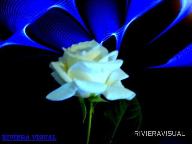 Planet Kitten- Riviera Visual  by RIVIERAVISUAL