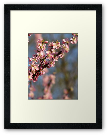 spring is in the air by Imogene Munday