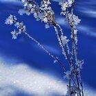 Icy Flower by Imi Koetz