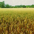 Textured Crop by Vicki Spindler (VHS Photography)