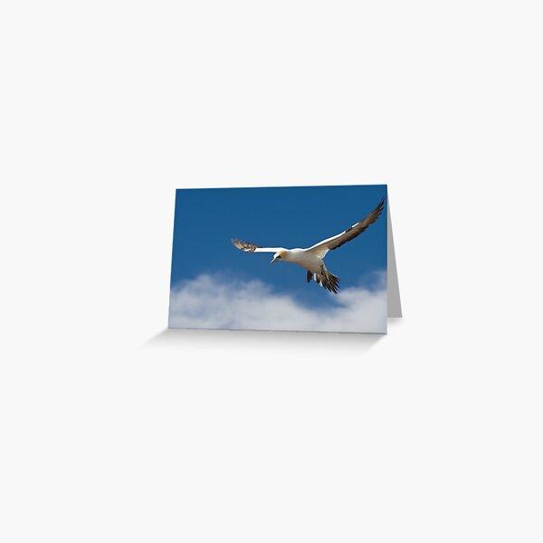 Gannet in flight Greeting Card