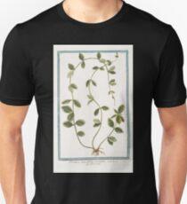Hortus Romanus Pervinca angustifolia variegata Pervenche Periwinkle T-Shirt