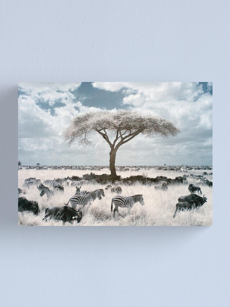 Alternate view of Infrared acacia Canvas Print