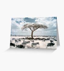 Infrared acacia Greeting Card