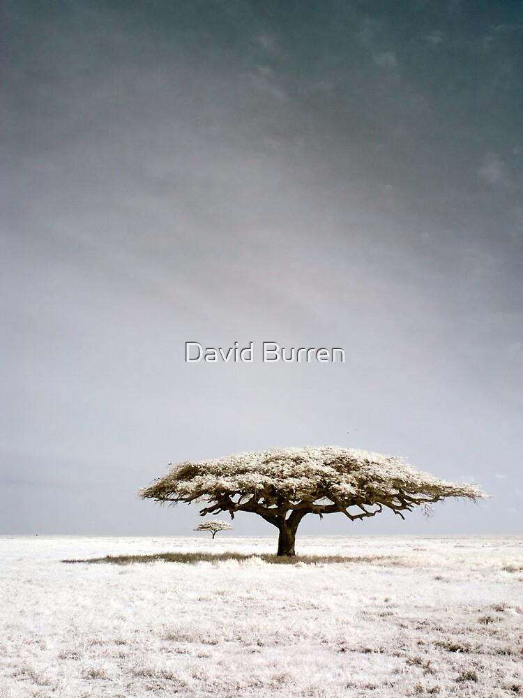 Serengeti dreaming by DavidBurren