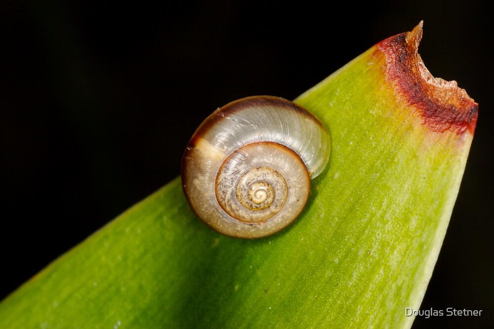 Snail on Snake plant by Douglas Stetner