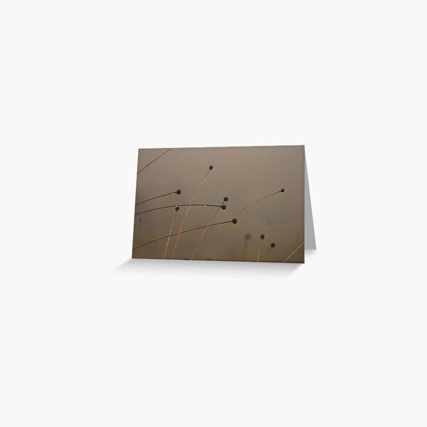 Button-grass in the rain Greeting Card