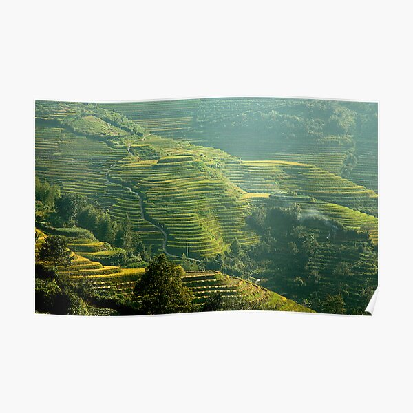 Terraced Hillsides Poster