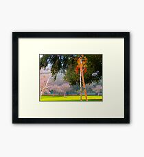 Green pastures and trees photo Framed Print