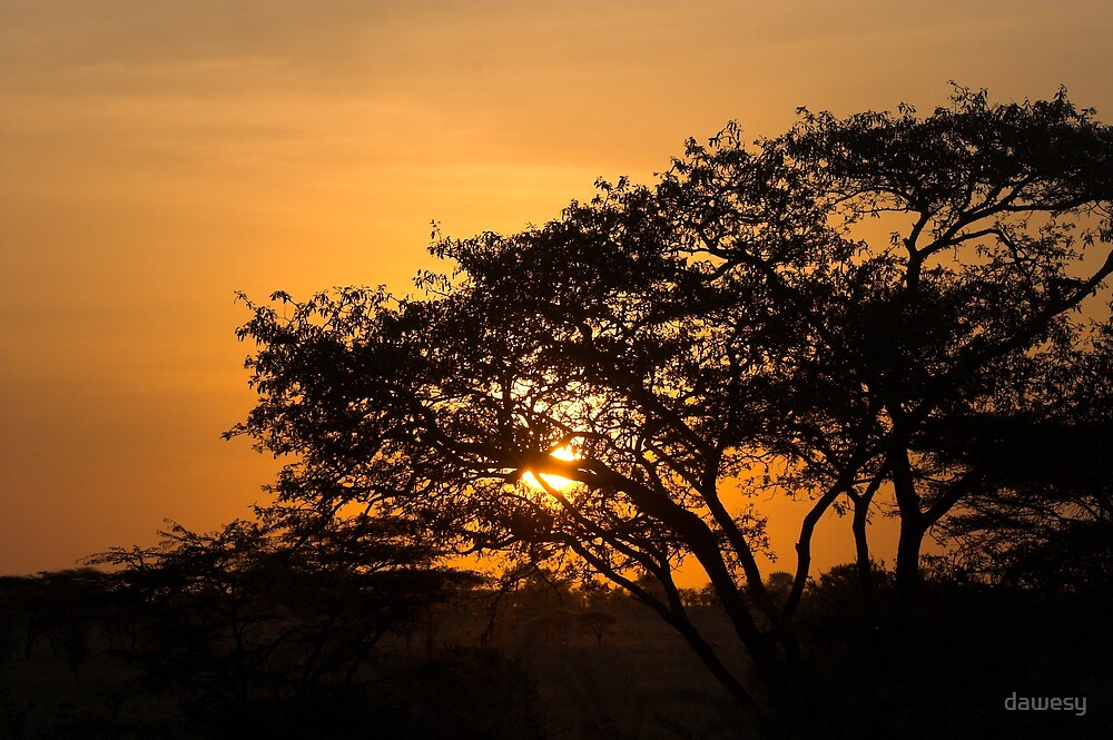 Serengeti Sunrise by dawesy