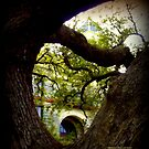 The Hanging Tree in Goliad, Texas by Charmiene Maxwell-Batten