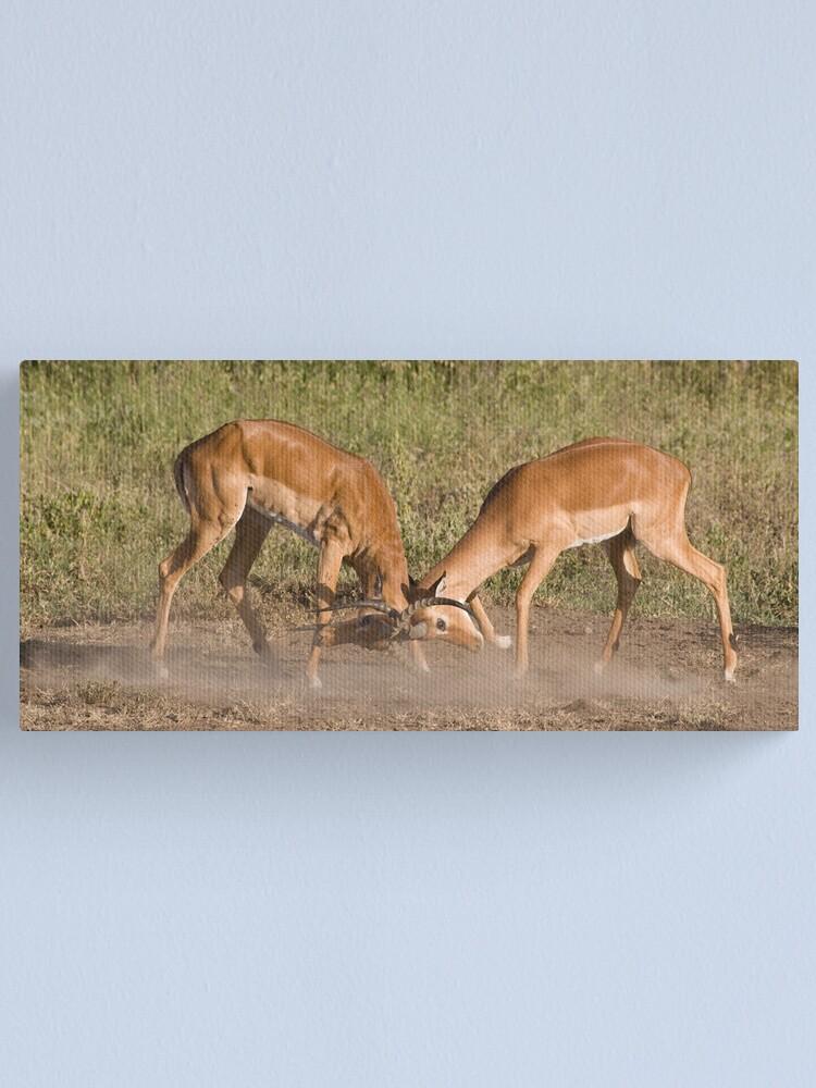 Alternate view of Impala scuffle Canvas Print