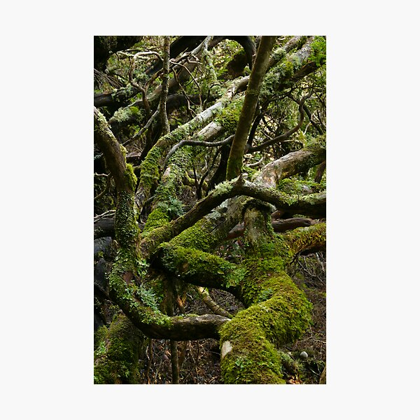 Forest jumble Photographic Print