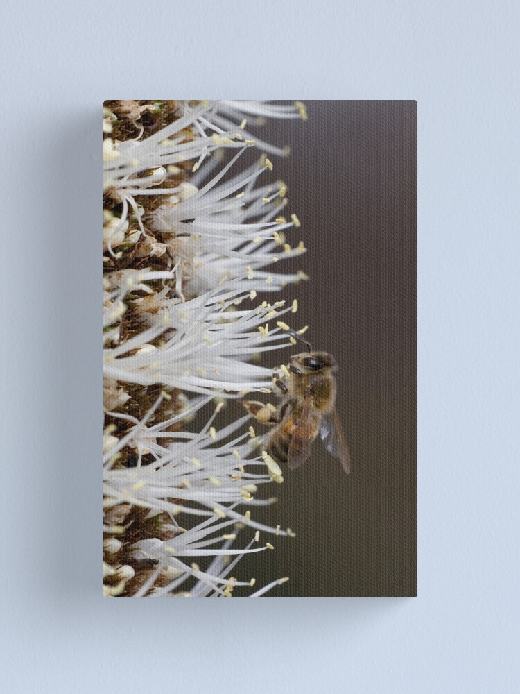Alternate view of Busy bee Canvas Print