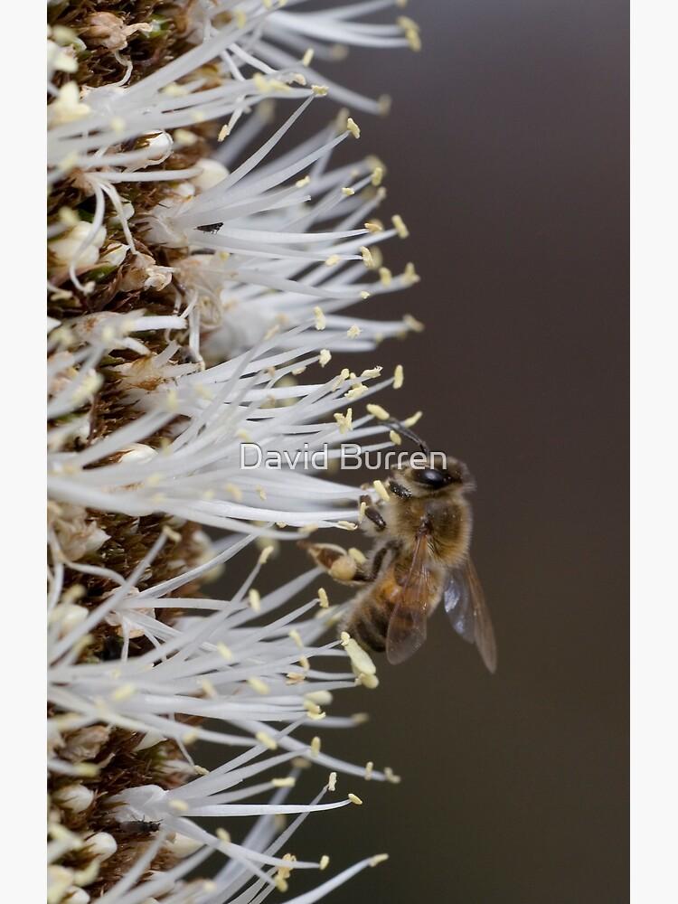 Busy bee by DavidBurren