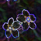 """Glowing Petals"" by Gail Jones"