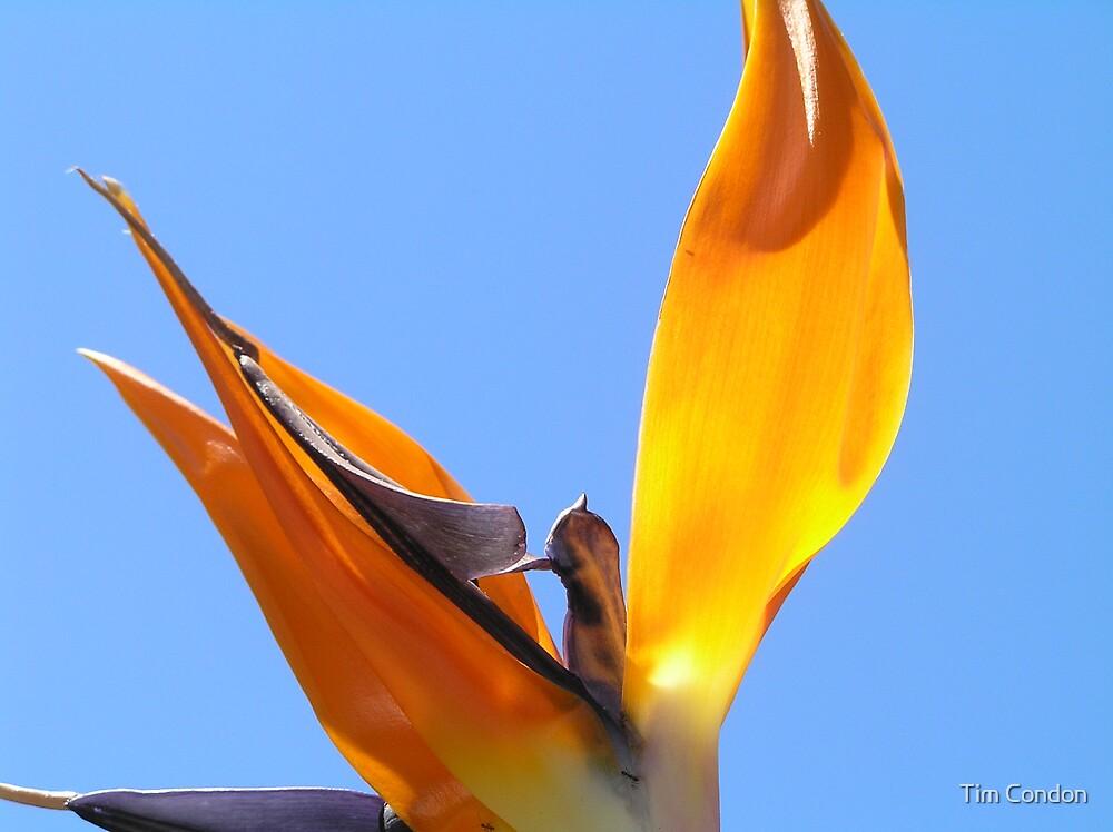 Bird Of Paradise II by Tim Condon