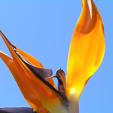 Bird Of Paradise II by tiggatim