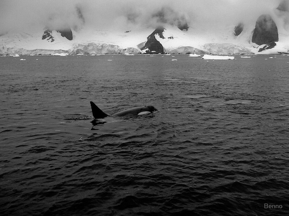 Orca by Benno