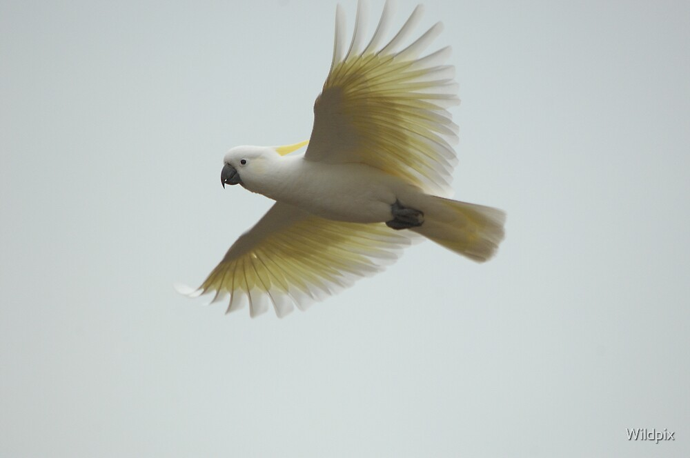 White and Yellow on Grey by Wildpix