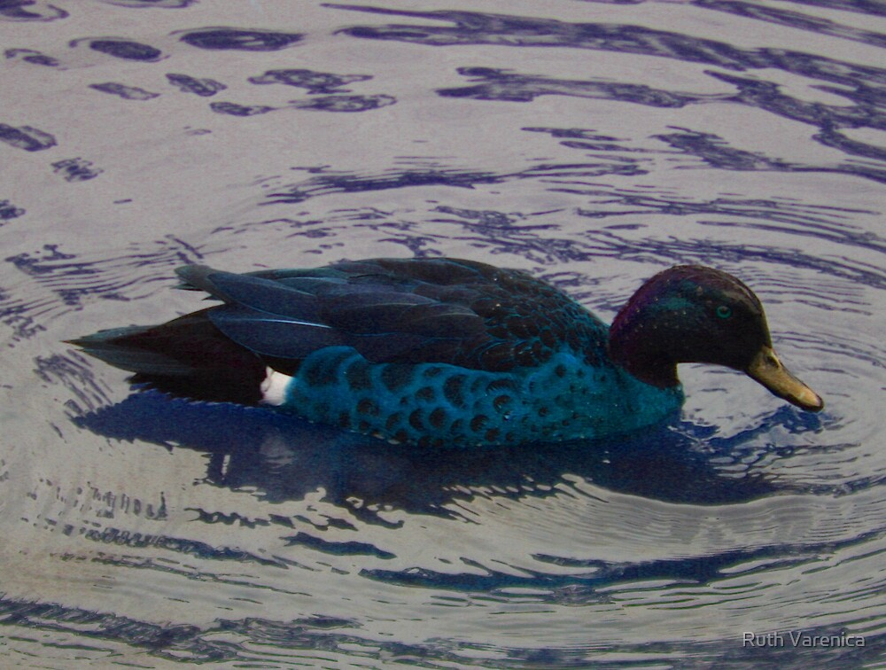 Blue duck by Ruth Varenica