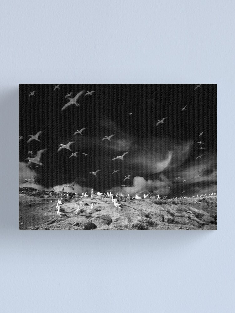Alternate view of Ghost birds Canvas Print