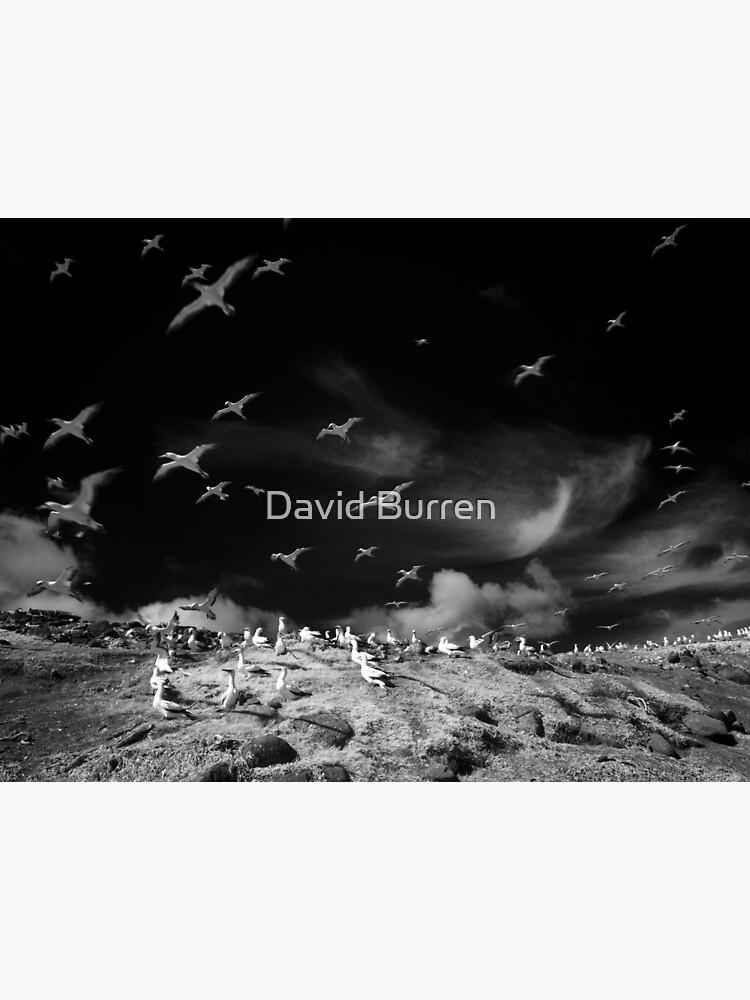 Ghost birds by DavidBurren
