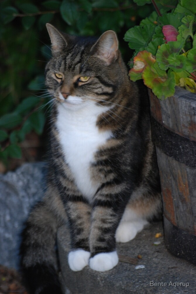 Aristocat by Bente Agerup