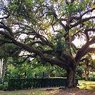 Tree of Life by LUISPENA