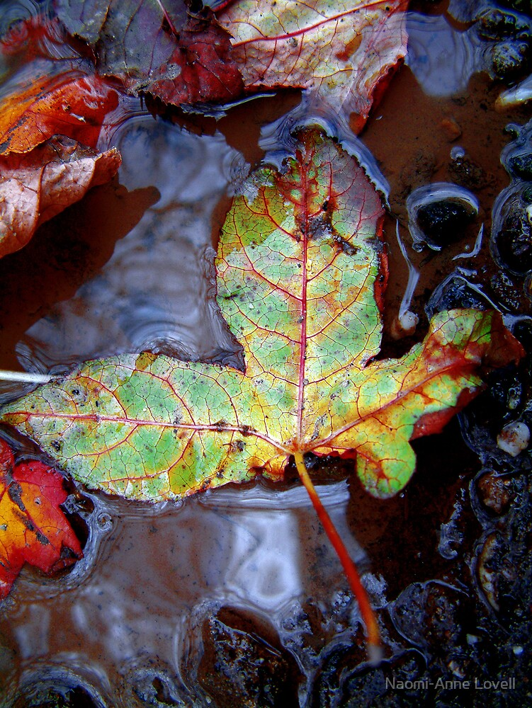 gReEn LEaF by Naomi-Anne Lovell