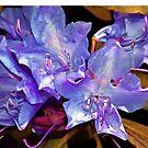 Rhododendron Glory 6 by Lynda Lehmann