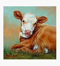 Pretty Calf Miniature Painting Photographic Print