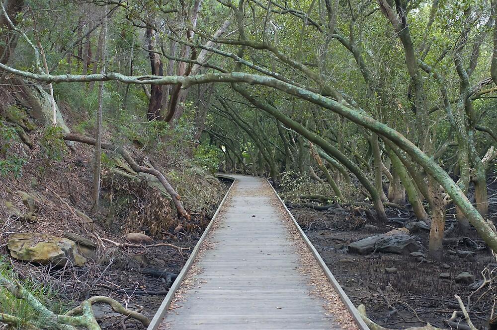 Down the Path by Craig Goldsmith