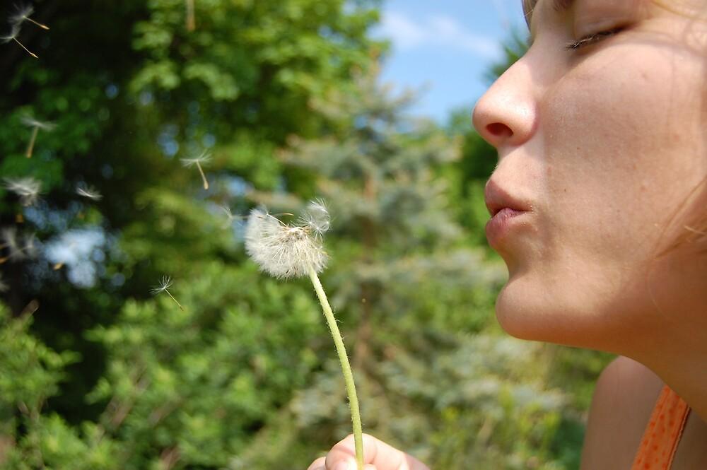 dandelion seeds by venkman