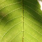leaf by venkman