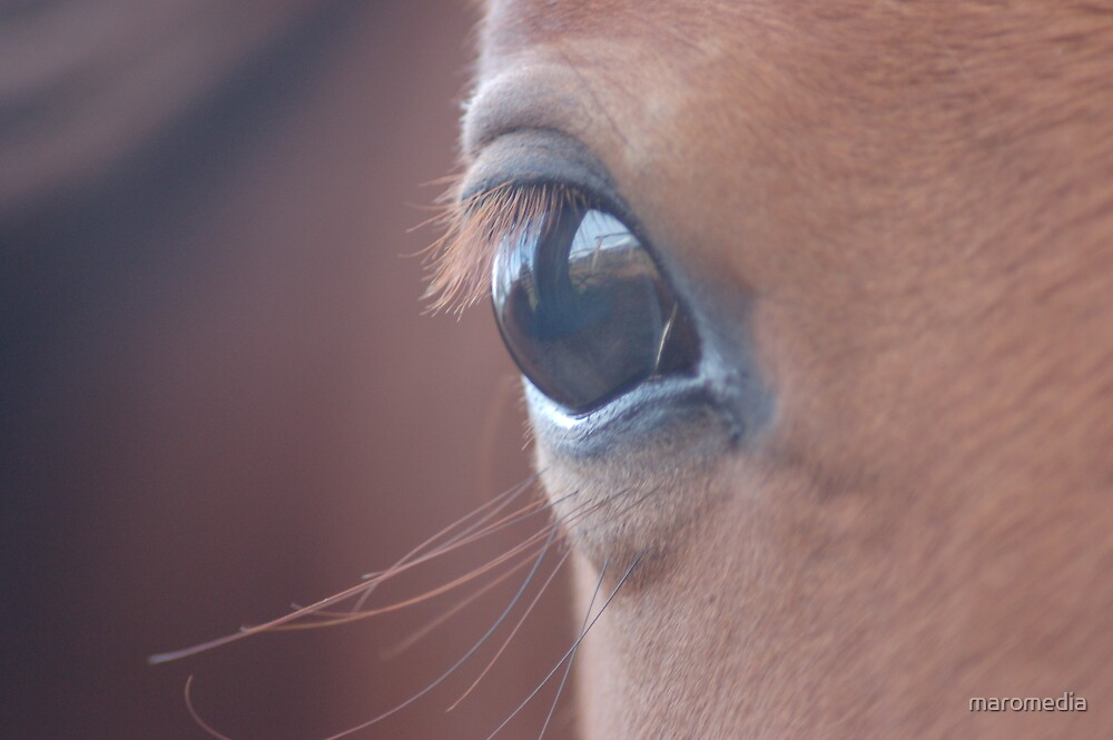 Through the horses eye by maromedia