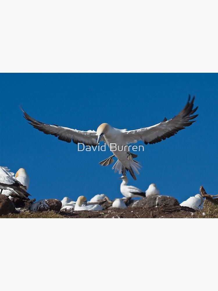 Flaps down by DavidBurren