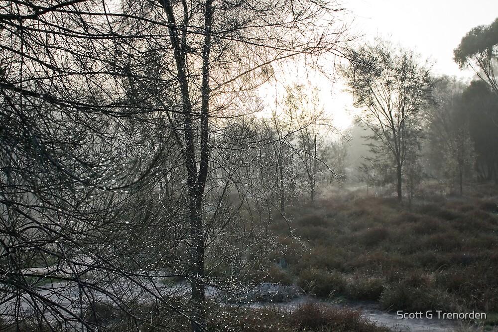 Mist & Beads by Scott G Trenorden