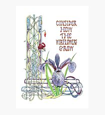 Consider the Wild Flowers Photographic Print