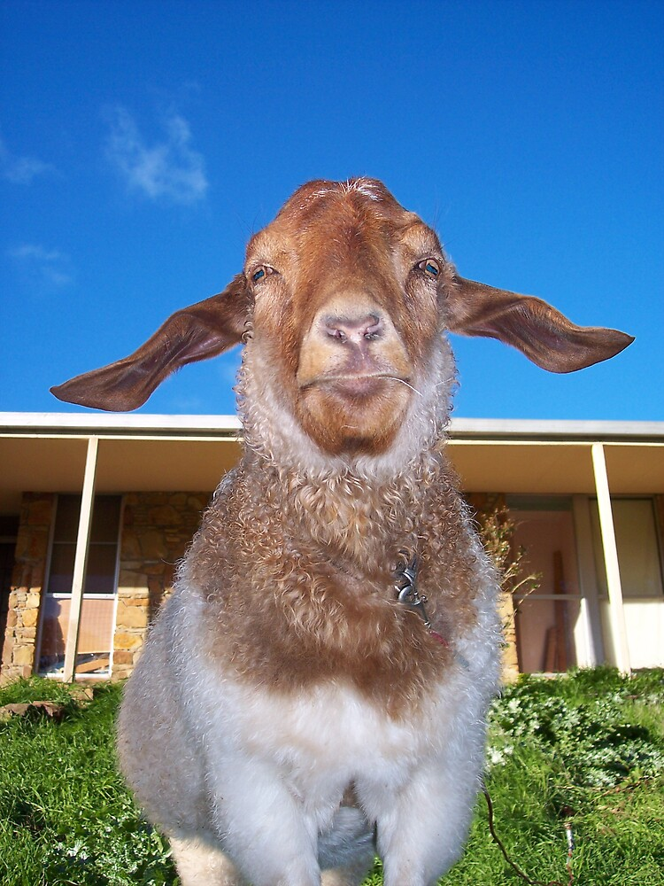 Pansy the Paranoid Goat by Denny